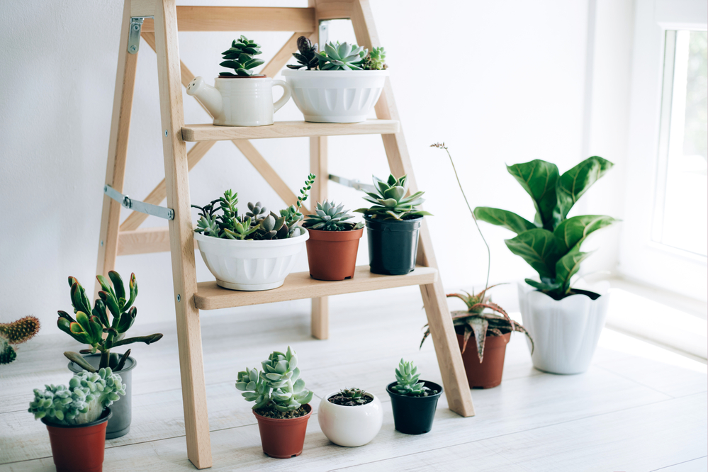How Can Indoor Plants Reduce Heat and Help Save More Electricity